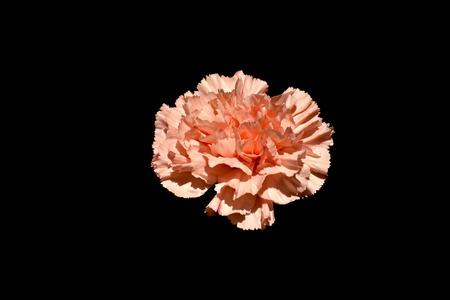Orange flower blossom Stock fotó
