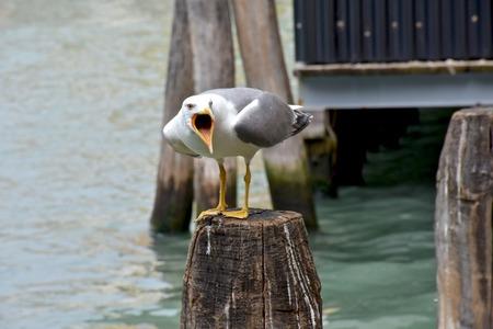 bird feet: Beautiful seagull Stock Photo