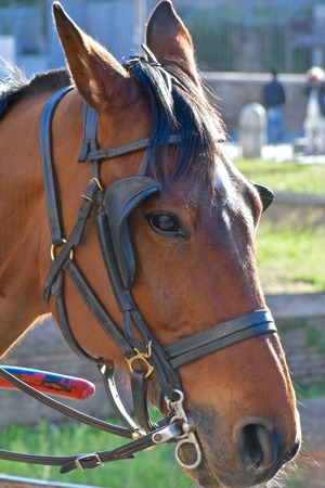 A horse pulling a carriage close up