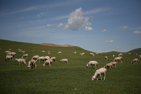 prairie: Prairie flock