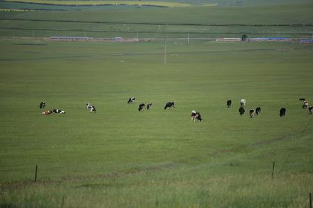 flock: Prairie flock