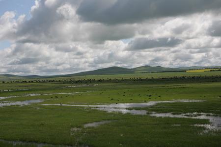 meandering: Natural grasslands, nine, meandering rivers