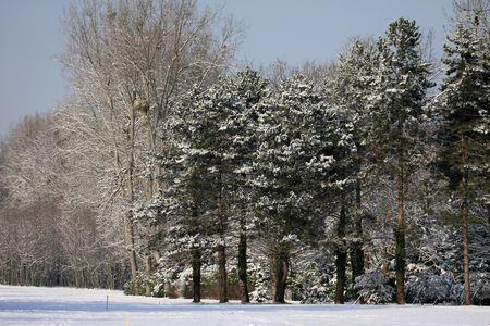 Park in winter under the snow photo