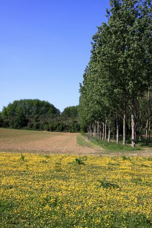 Country landscape in France