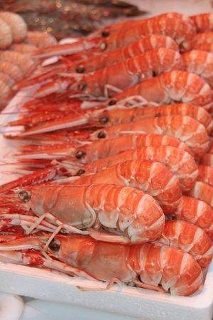 visboer: Terugkeer van de visserij op de repetitieperiode Stockfoto
