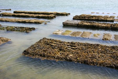 vendee: By in oysters in Vendee