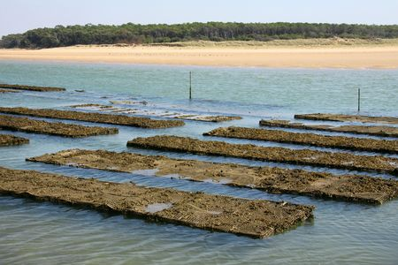 Breeding of oysters in Vendée (France)