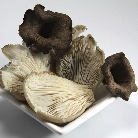 Mushrooms in autumn Stock Photo