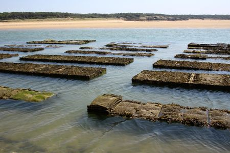 vendee: By in oysters
