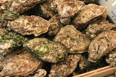 Tasting of oysters