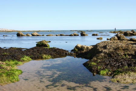 vendee: Landscape of the vendean coast in summer
