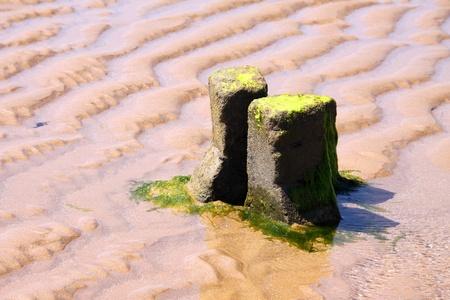 Landscape of the vendean coast Stock Photo - 8934311