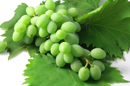 Bunch of grapes in June Stock Photo - 8931816
