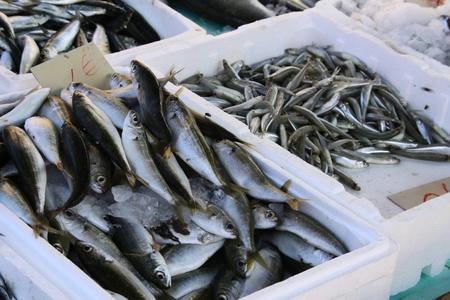 kreta: K�rbe, frische Fische in Kreta
