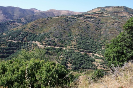 Landscape of mountain in Crete with fields of olive trees photo