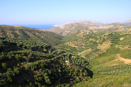 Landscape of Crete of the North with plantations of olives and the other varieties