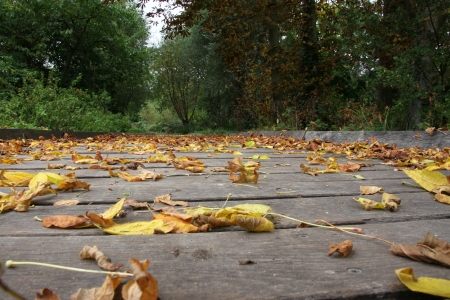 Dead leaves on a wooden bridge