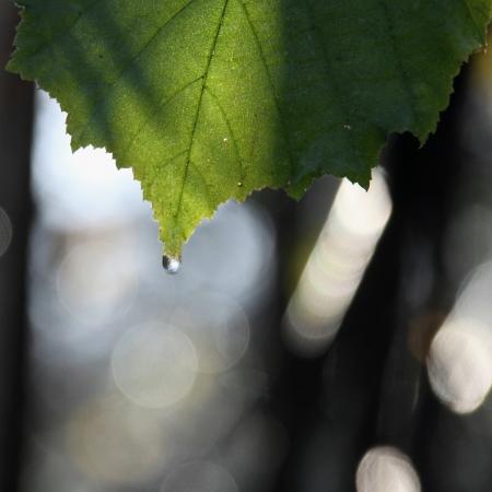 Roc�o de la madrugada Foto de archivo - 17661185