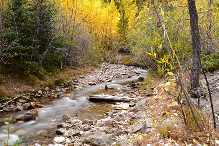 Small soft gentle creek with rocks in Colorado mountains on a fall day with yellow aspen trees Stock Photo