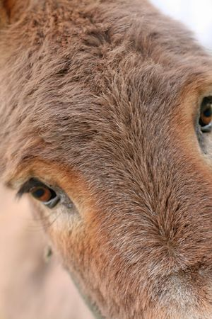 grosse fesse: Close up of a donkey