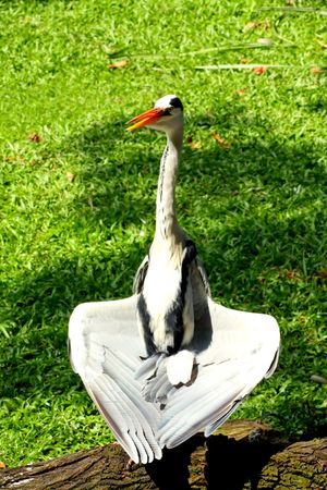 Crane on yoga posture photo