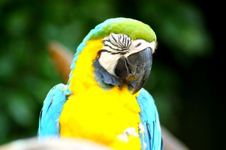 Beautiful Colorful Parrot Close Up Stock Photo - 5409297