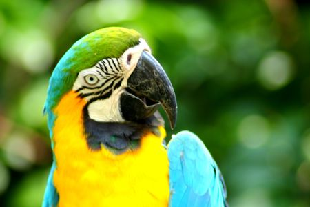 Beautiful Colorful Parrot Close Up