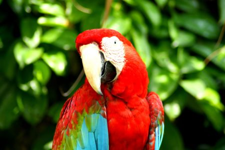 Beautiful Colorful Parrot Close Up photo