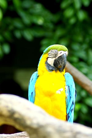 Beautiful Colorful Parrot On Tree Trunk Stock Photo - 5409303
