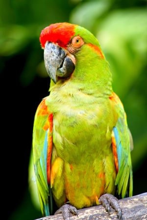 Beautiful Colorful Parrot On Tree Trunk photo