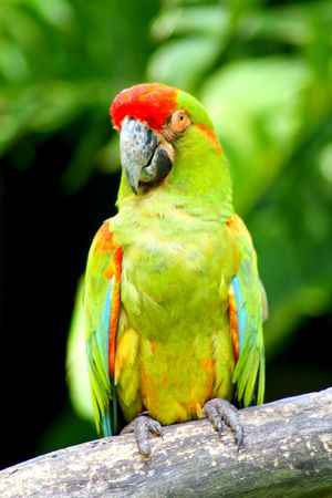 Beautiful Colorful Parrot On Tree Trunk