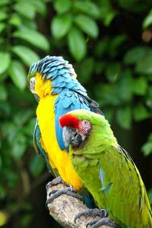 Beautiful Colorful perroquet sur Tree Trunk Banque d'images