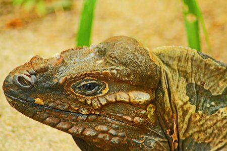 Bornean Marsh Close Up