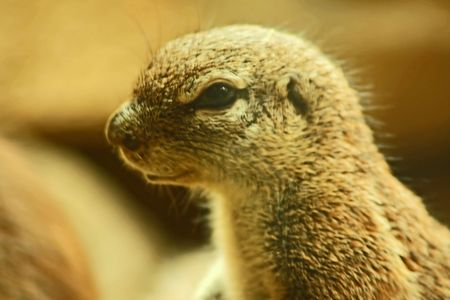Critter Close Up photo