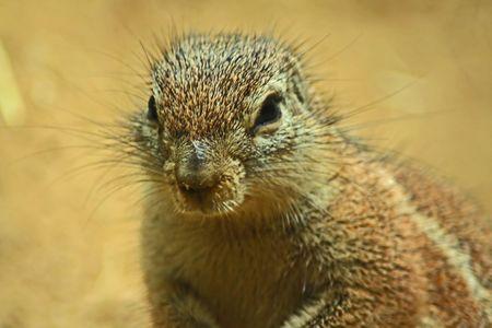 Critter Close Up photo