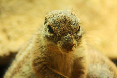 critter: Critter Close Up Stock Photo