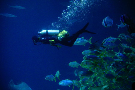 Diver in an aquarium