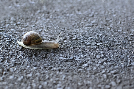 Close up detail of a garden snail slithering across road asphalt photo