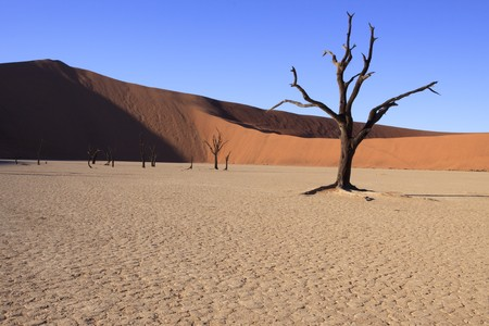 Dead tree and dunes at Dead Vlei in Namibia Stock Photo - 7040195