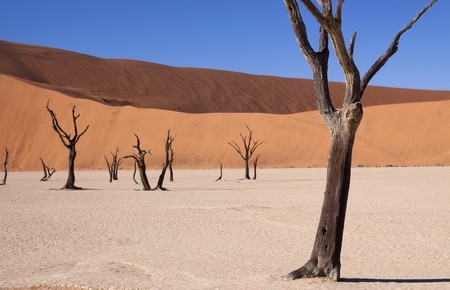 Dead acacia tree at dead vlei in Namibia Standard-Bild