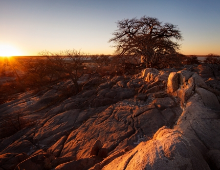 kalahari: Sunset over a boabab tree at kubu island