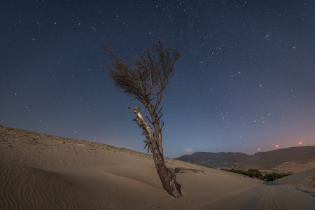 Lonely dry tree on a sand dune next to a road at night in the south of Spain Фото со стока