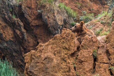 Wild brown bear in a nature reserve Banco de Imagens