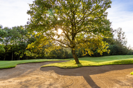 scenic background: Sand bunker and backlit leafy green tree in summer sunshine on a golf course in Soufflenheim, Alsace, France, scenic background view