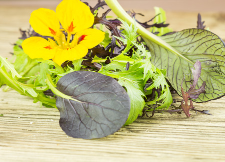 pungent: Selezione di foglia di erbe selvatiche verdi e un colorato giallo nasturzio fiore con il suo gusto pepato pungente da utilizzare come ingredienti insalata sani ammucchiati su un tavolo di legno Archivio Fotografico