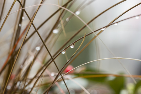 inclement weather: Close up Shot of Wet Grasses with Raindrops During Autumn Season Stock Photo