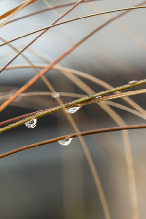 inclement: Close up Shot of Wet Grasses with Raindrops During Autumn Season Stock Photo