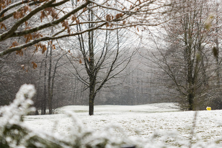 deciduous woodland: Misty winter landscape with snow and leafless deciduous trees in a park  in a nature, season and weather concept Stock Photo