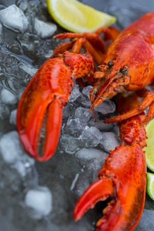 lobster dinner: Fresh Lobster Chilling on Ice with Wedges of Lime