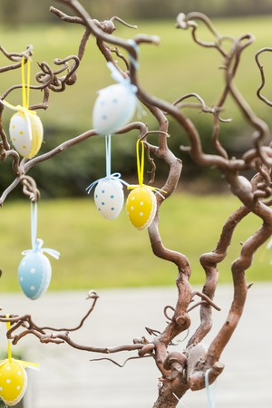 egg hunt: Pretty decorated yellow and blue polka dot Easter eggs hanging in a tree in a garden or park by colorful ribbons symbolic of a childhood egg hunt or party celebration